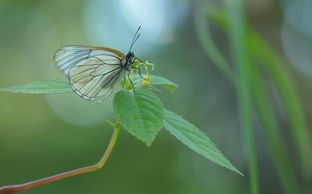 Под сенью трав, в тиши рассвета, Живой Цветок встречает лето