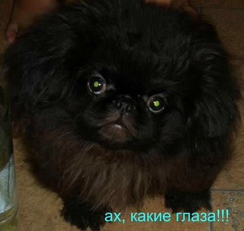 маленькая собачка - большая слабость