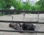 http://img-fotki.yandex.ru/get/9164/193491732.4/0_a46de_c88f8f33_S.jpg