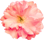 Butterfly Bouquet (47).png