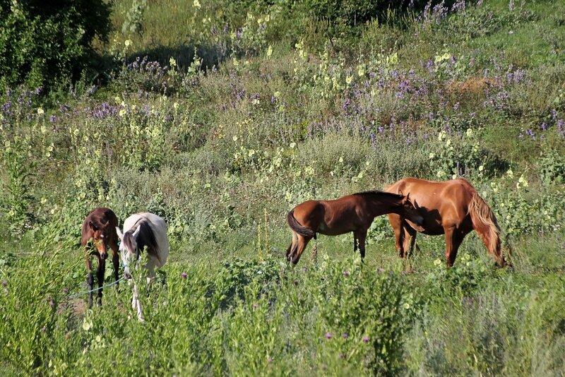 Лошади, кони и жеребята в пещерном городе Эски-Кермен, Крым IMG_5838.JPG