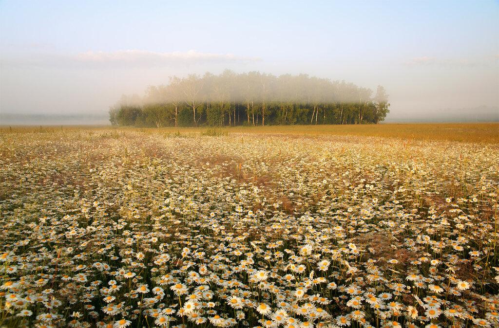 Рассвет в ромашковых полях...