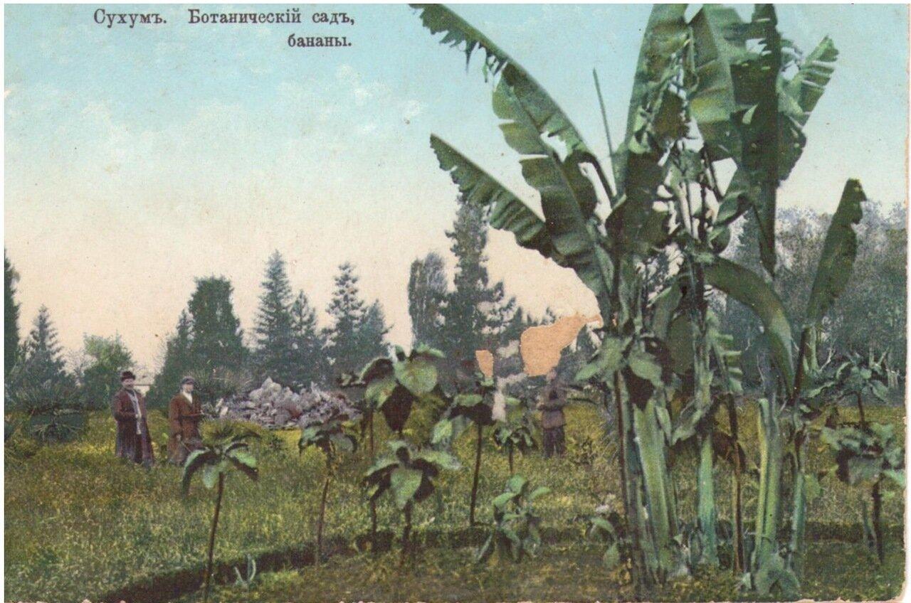 Ботанический сад, бананы