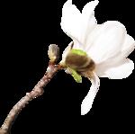 Spring_Mood