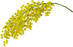 flowers (59).png