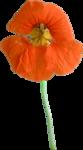 Holliewood_SpringFaeries_Flowers15.png