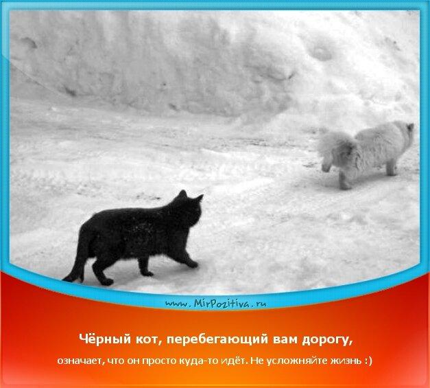 позитивчик дня - Чёрный кот, перебегающий вам дорогу, означает, что он просто куда-то идёт. Не усложняйте жизнь :)