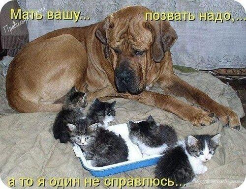 http://img-fotki.yandex.ru/get/9165/194408087.3/0_9e06a_85f0b9b7_L.jpg
