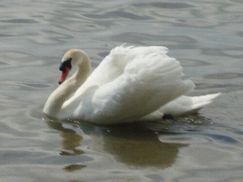 Отдых в Беларуссии: Нарочанские озера, царевна-лебедь