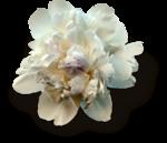 mzimm_daydreamer_addon_flower_sh.png