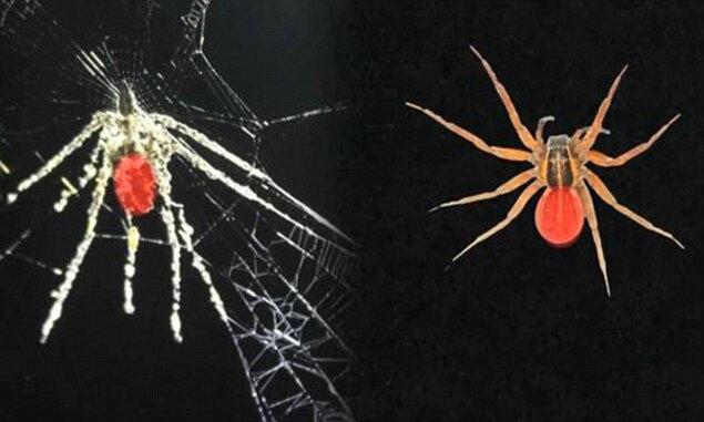 паук перу скульптуры