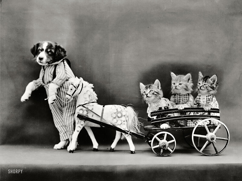 Circa 1914. 'Puppy leading pony cart carrying three kittens.' So sweet, you could pour this on your pancakes. Photo by Harry W. Frees