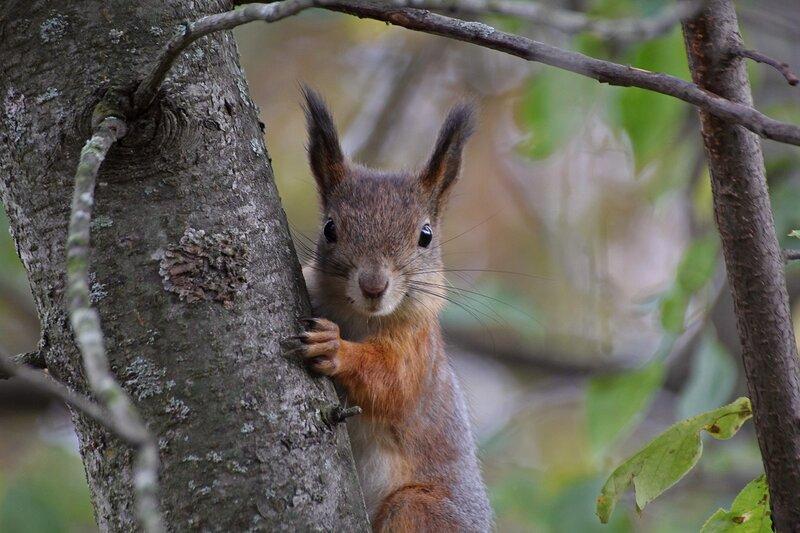Портрет белочки на дереве IMG_9473