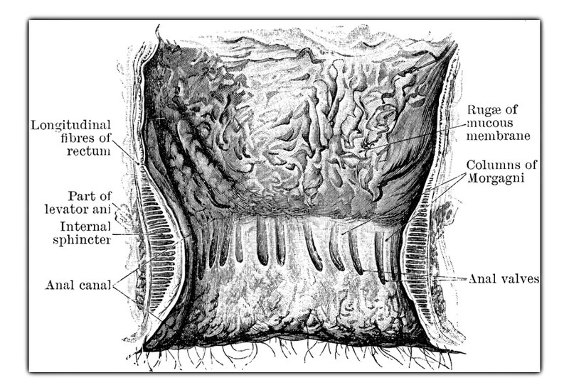 Мозг На Автопилоте Торрент