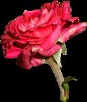 RR_MemoriesOfMom_RoseGarden_Element (64).png