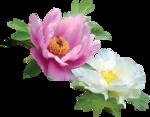 Holliewood_SpringFaeries_Flowers3.png