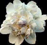 mzimm_daydreamer_addon_flower.png