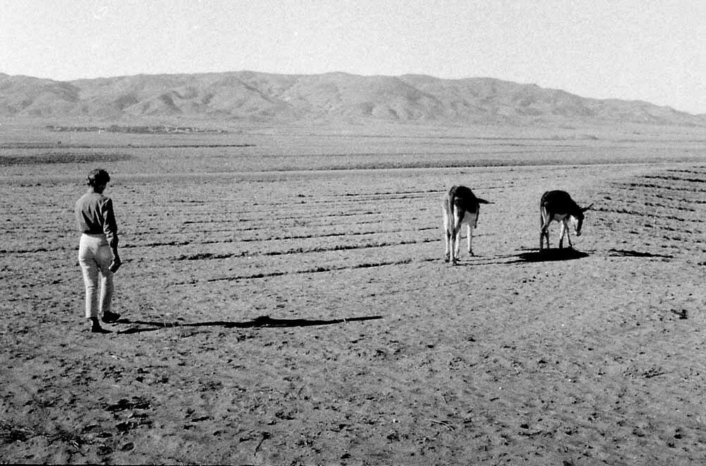 Иран. Ослы из Себзевара