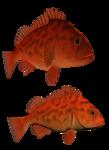 рыба (70).png