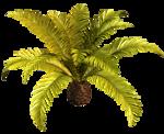 R11 - Palms - 2013 - 019.png