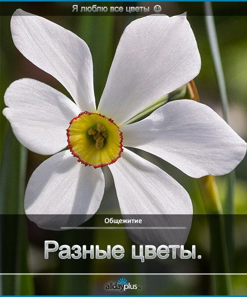 Я люблю все цветы, часть 45.