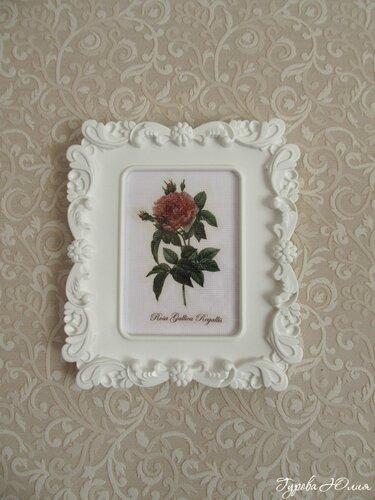 красными цветами комнатная фото