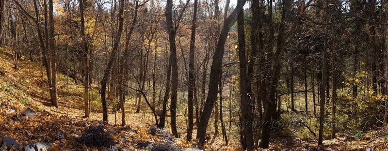 Лес справа от дома, Усадьба Любвино, Тучково
