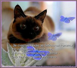 http://img-fotki.yandex.ru/get/9167/194408087.4/0_a5ffc_603351bf_M.jpg