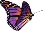priss_laprimavera_butterfly1.png