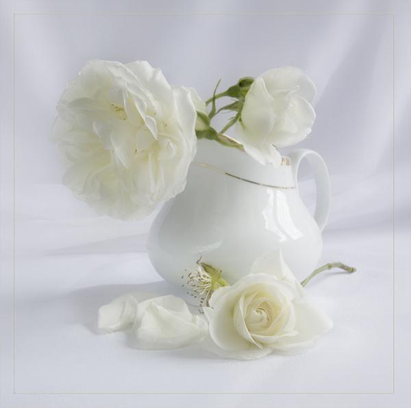 Белые розы в белой вазе на белом фоне