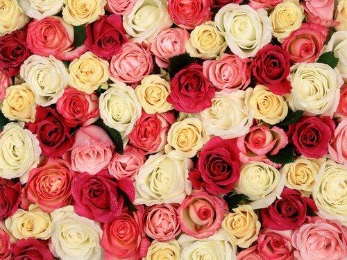 Розы, розы, розы, розы открытка поздравление картинка