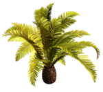 Palms  (23).png