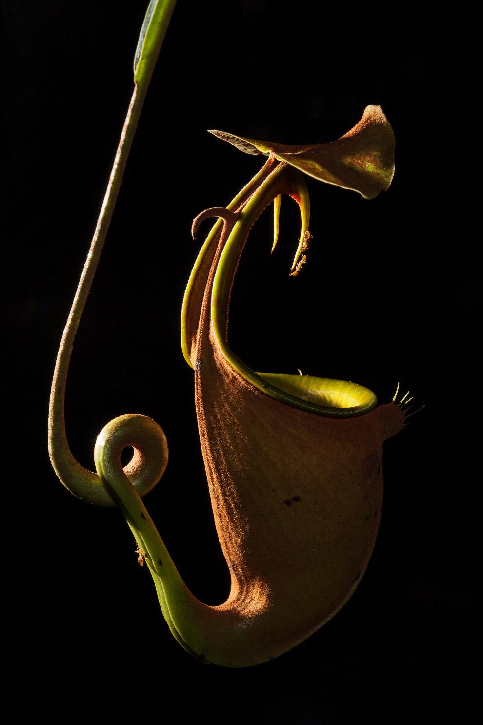 11. Капельки оливкового масла. (Фото Herve Elettro   PA Wire   Royal Society Publishing Photography