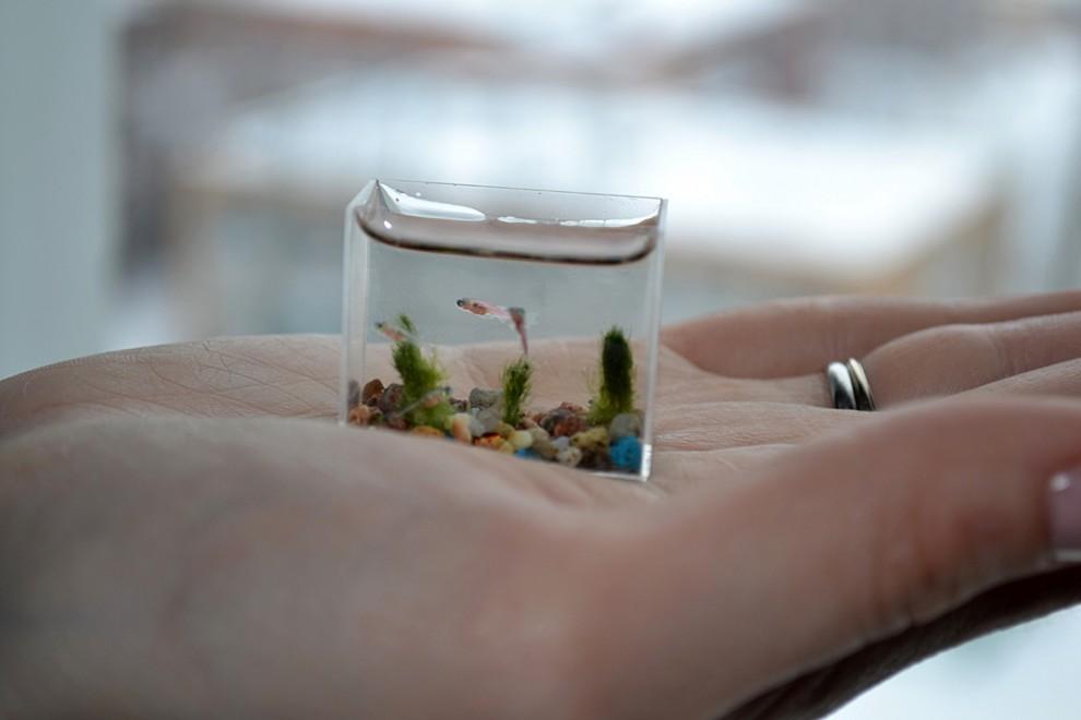 4. Это абсолютный рекорд, ведь до этого размер самого маленького аквариума составлял 60 миллилитров.