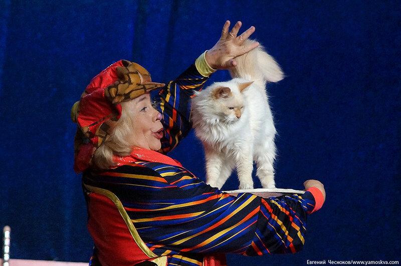 Осень. Театр кошек. ДИНАСТИЯ. 15.10.15.38..jpg