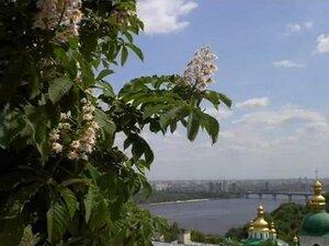 «Київський вальс» або Знову цвітуть каштани...