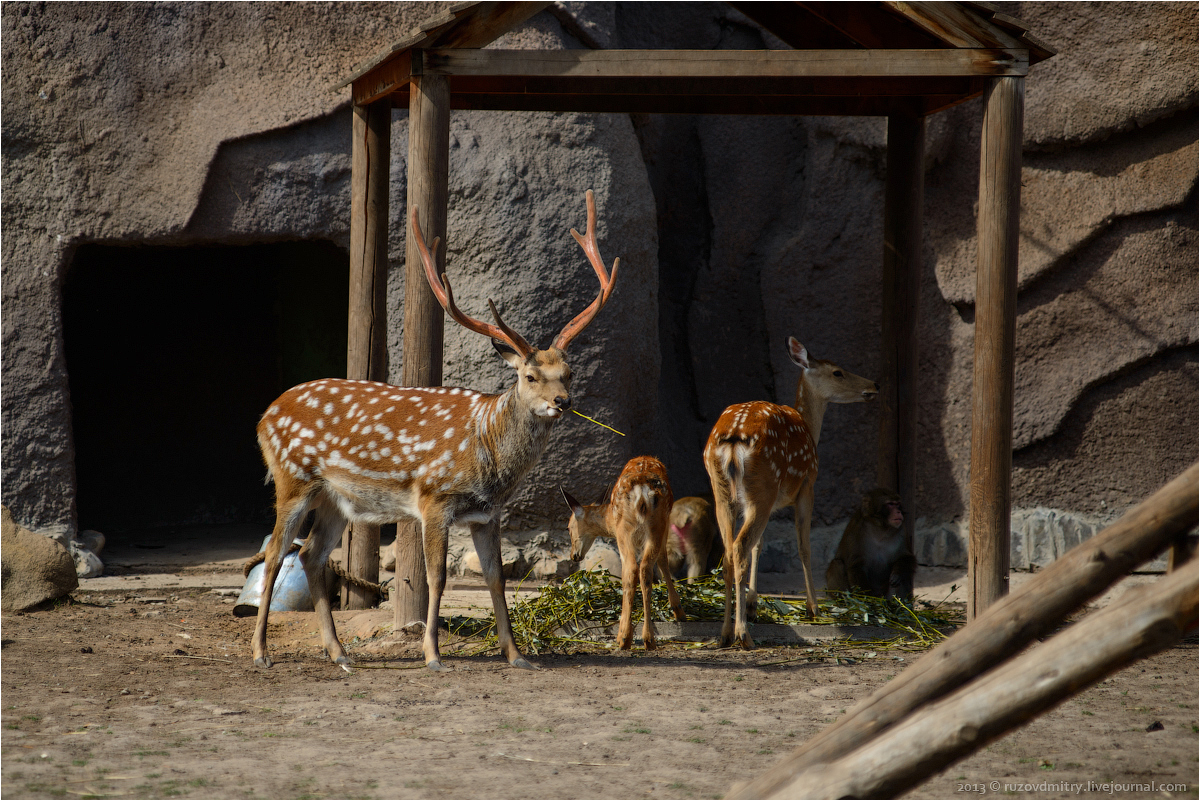 Ижевский зоопарк: ruzovdmitry — LiveJournal