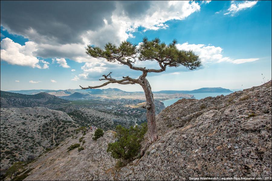 Деревья-путешественники