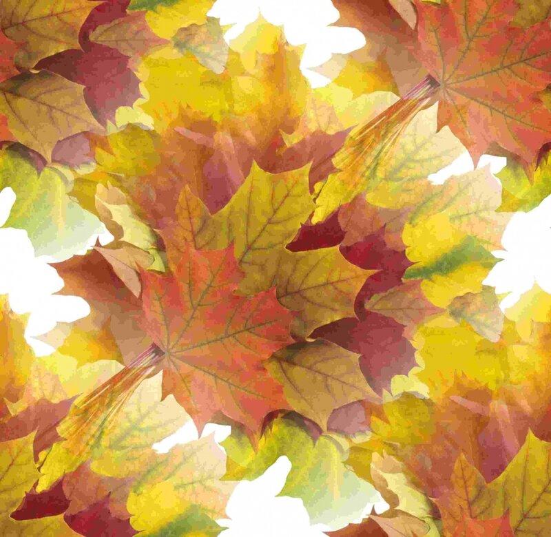 Картинки с осенними листьями анимация