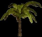 R11 - Palms - 2013 - 011.png