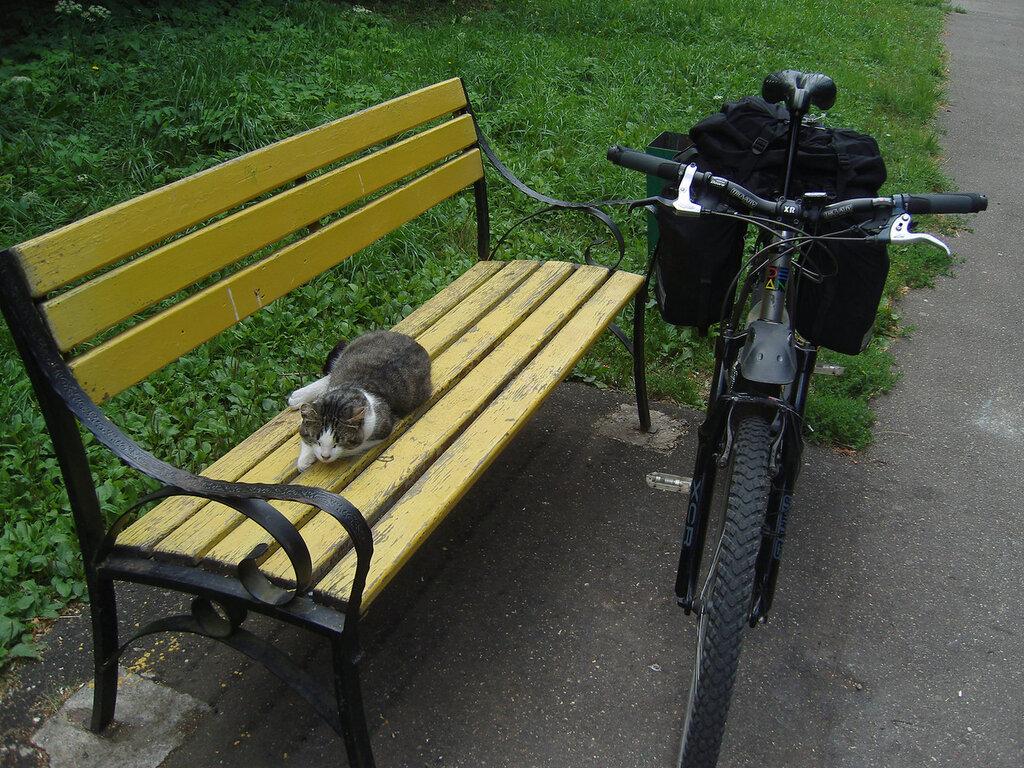 пожилой кот на скамейке в парке Победы Наро-Фоминска