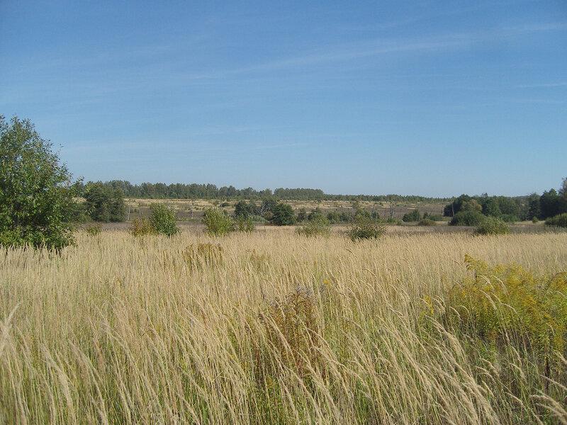 трава колосится в верховьях Осетра