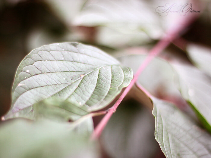 Мох и листья