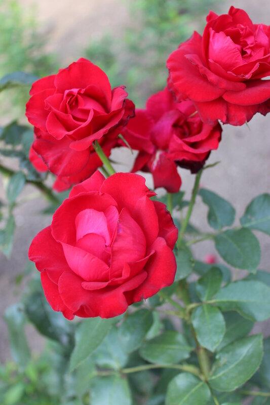 Доброе утро! Цветы, фото для вас!