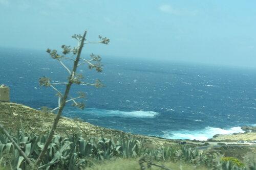 Растение на фоне моря