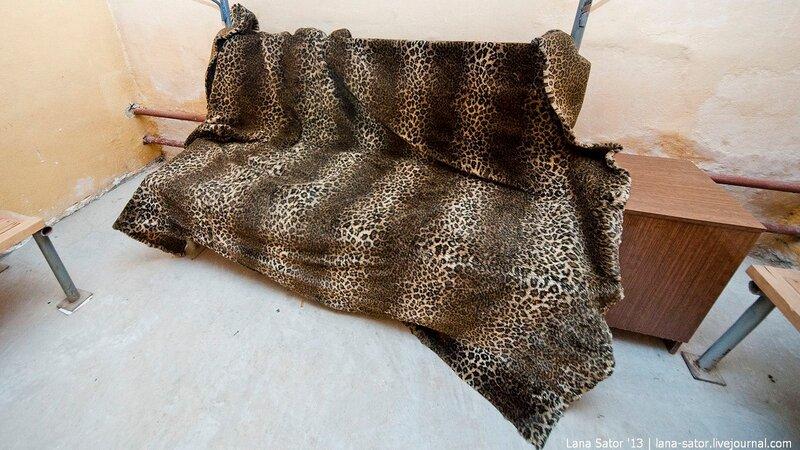 Леопардовое покрывало фото фото 647-191