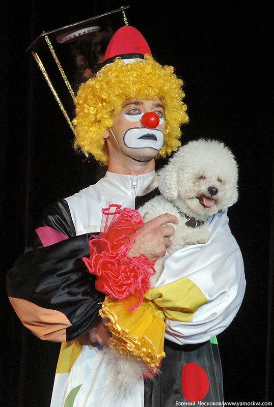 Осень. Театр кошек. ДИНАСТИЯ. 15.10.15.02..jpg