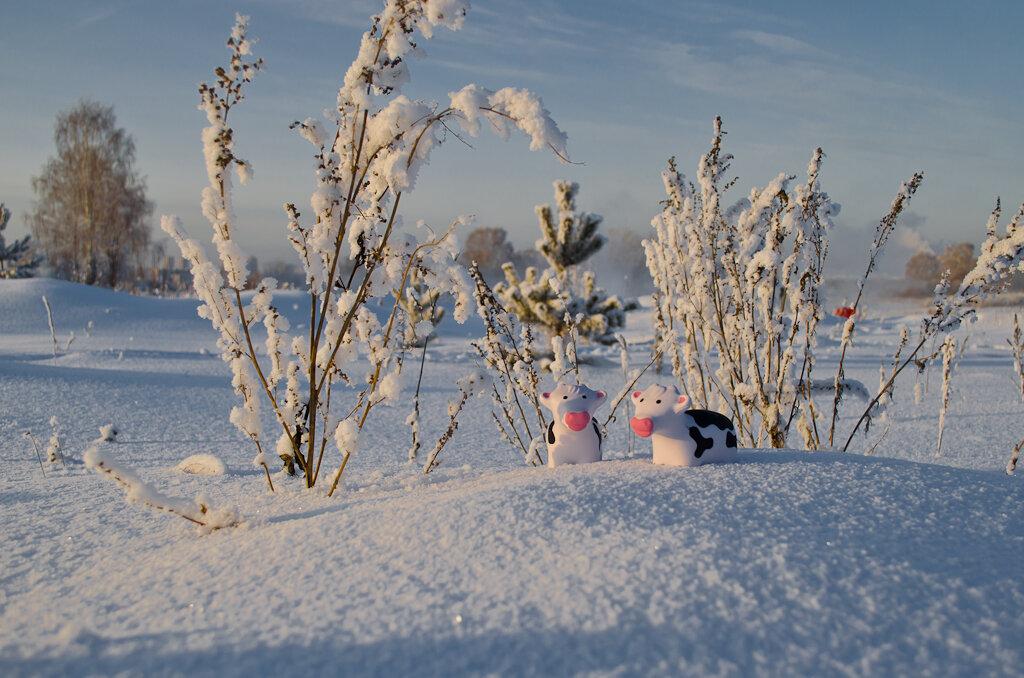 Зимний пейзаж в режимное время, снятый на Nikon D5100 KIT 18-55