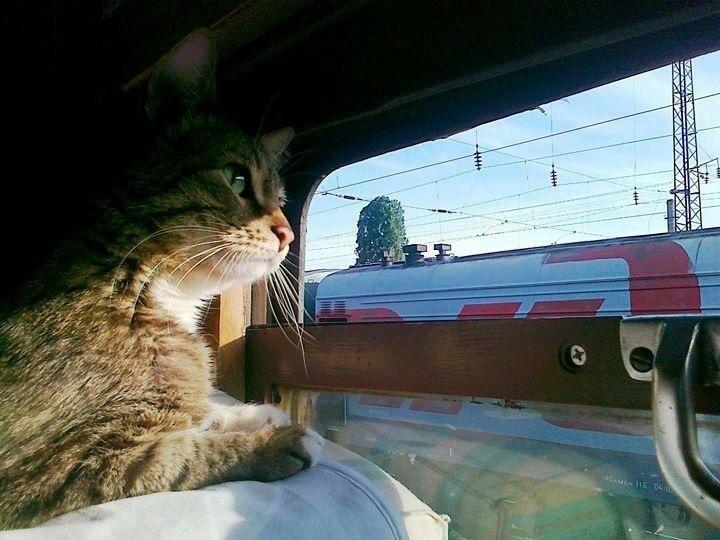 в поезде.jpg