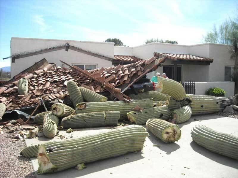 Последствия падения кактуса